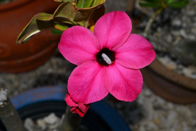 Beautiful Flowers 01