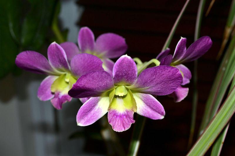 Beautiful Flowers 02