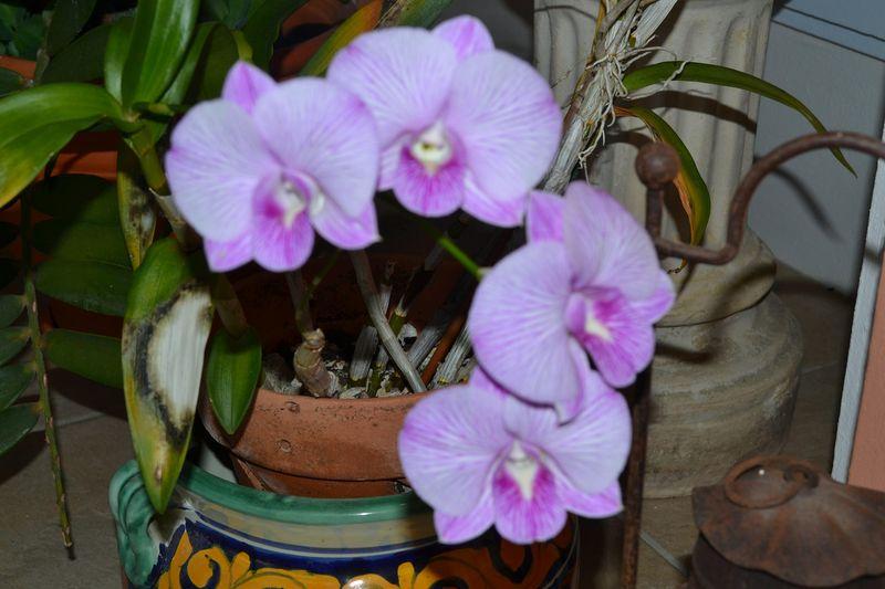 Beautiful Flowers 04