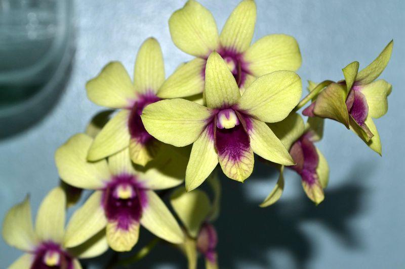 Beautiful Flowers 03
