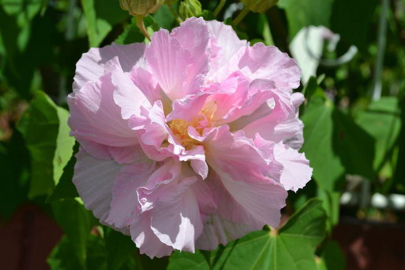 Beautiful Flowers 05